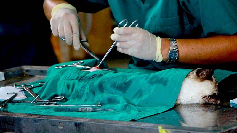 Veteriner-Cerrahisinde-Kullanılan-Dikiş-Materyalleri-Boz-Tıbbi